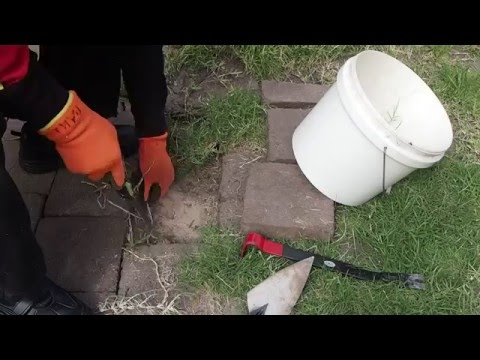 Weeding pavers and removing roots under pavers