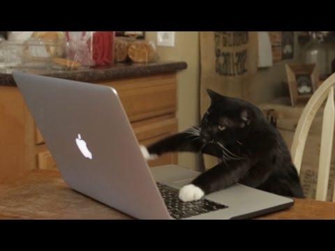 Aaron's Animals - Facebook Hacker