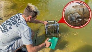 DIY TRAP CATCHES FISH in My Own POND!! *FEEDING*