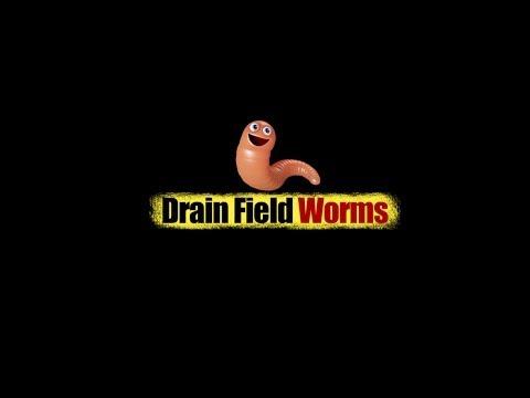 Clogged Drain Field