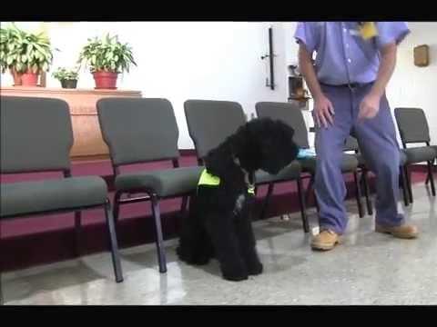 Rodney Houghton Training Demo with Service Dog, Annie