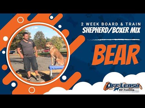 German Shepherd - Boxer Mix, Bear!  Dog with Anxiety Dog Training   Off Leash K9