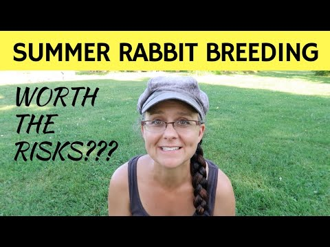 The Risks of Breeding Meat Rabbits in the Summer