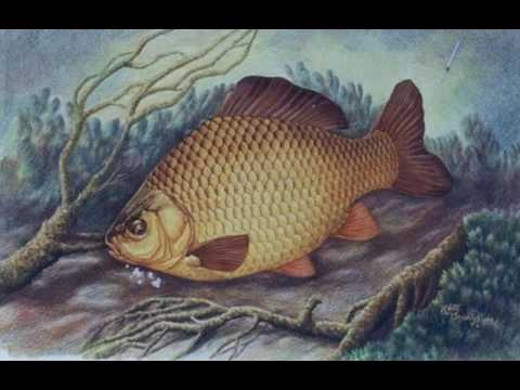 Ep  197 Keith Linsell, Angling Encounters Part 1