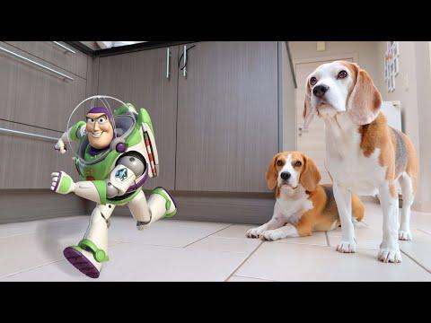 Cute Dogs Vs Helium Buzz Lightyear Balloon