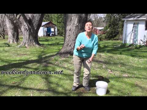 DIY Soil Test:  Learn How To Test Your Soil's Water Percolation Rate