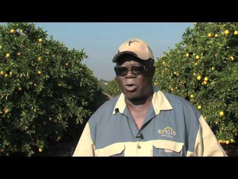 Farming entrepreneurs: Citrus farming