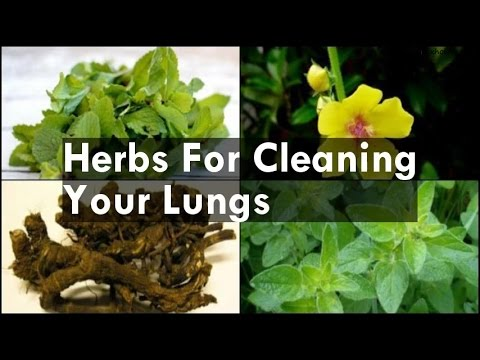 Herbs For Cleaning Your Lungs