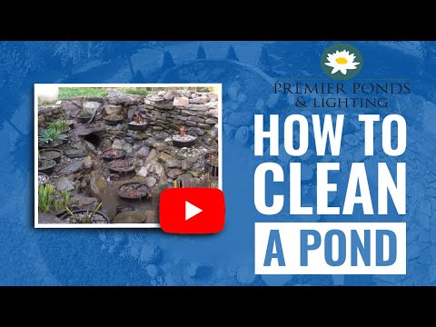 How to clean a Koi Pond in 10 steps during Fall