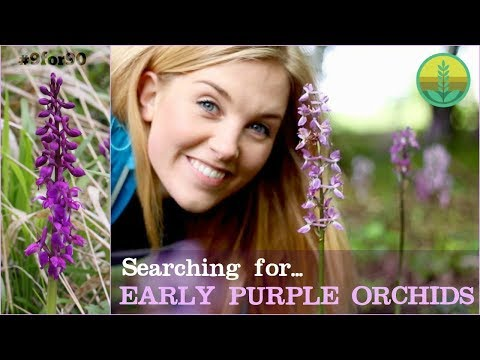Searching for the Early Purple Orchid | Maddie and Norfolk Wildlife Trust
