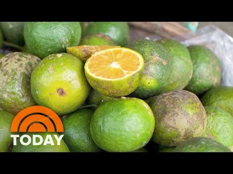 You've Been Picking Your Oranges Wrong At The Supermarket, Here's The Right Way | TODAY