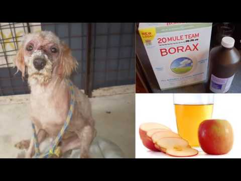 How To Cure Mange in Dogs Home Remedies For Dog Mange medium