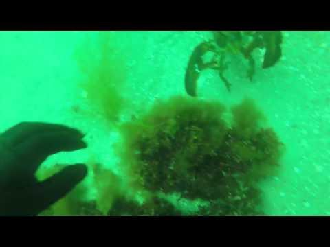 scuba lobsters 2016