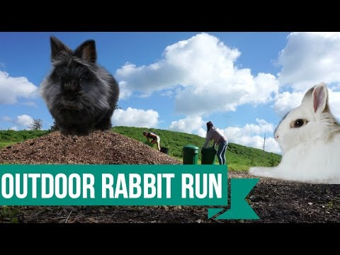 Setting Up The Outdoor Rabbit Run!