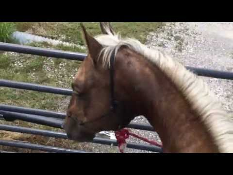 Working With A Buddy Sour or Herd Bound Horse - Part 1 of 3 - Taking A Horse Out Alone