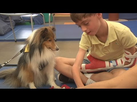 Hand in Paw therapy dogs help patients across Alabama