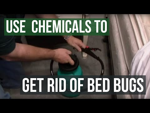 How to get rid of bed bugs with professional chemicals