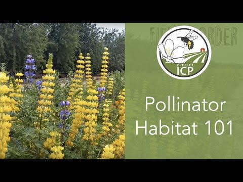 Pollinator Habitat 101: Incorporating Flowers on Farms to Support Bees