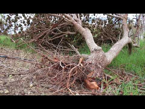 Hurricane Maria - Category 5 Hurricane Aftermath