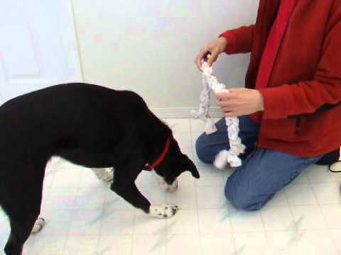 Training  'Take' and 'Give' Objects for a Formal Service Dog Retrieve