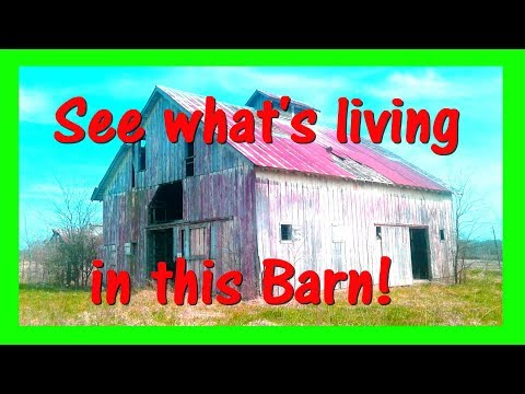 Exploring 120 year old Spooky Barns and House..