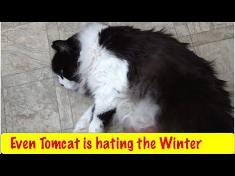 Winter has Been Brutal
