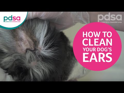 How to clean your dog's ears and recognise ear problems