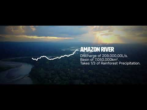 Amazon Rainforest - Water