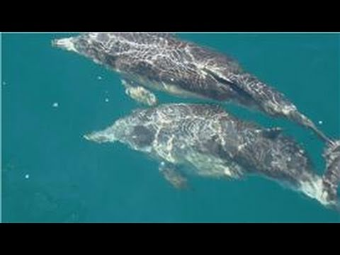All About Dolphins : Do Dolphins Migrate or Hibernate?