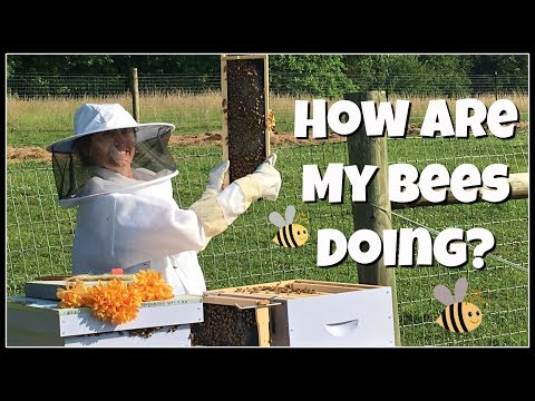 How Are My BEES Doing?