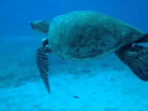 Diving - Sea Turtle Crossing