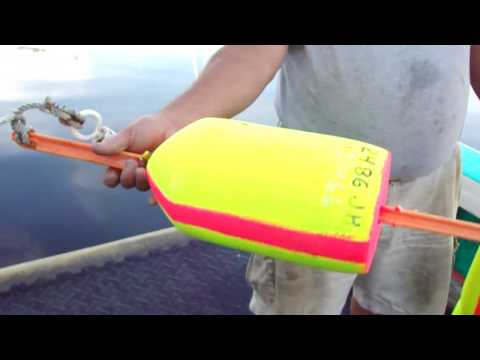 Anatomy Of A lobster Buoy Video With Doc Herrick