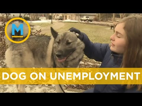 Dog gets approved for unemployment benefits of $360 a week | Your Morning
