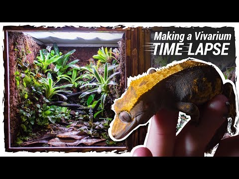 Making a Crested Gecko Vivarium (Time Lapse)