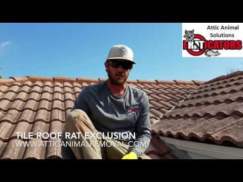 Rats in Tile Roof - Rat Removal Melbourne FL