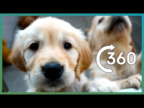 ADORABLE Puppy Guide Dogs In 360° | Earth Unplugged