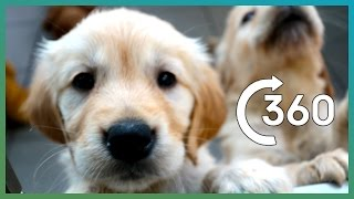 ADORABLE Puppy Guide Dogs In 360°   Earth Unplugged