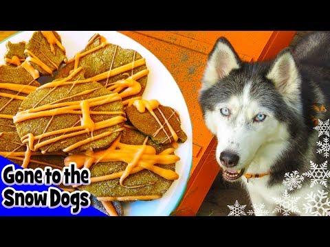 DIY Halloween Dog Treats BARK O' LANTERN DOG TREATS   Snow Dogs Snacks 28