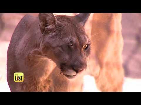 Arizona's Phoenix Zoo Shows 4 Ways to Avoid & Survive Animal Attacks