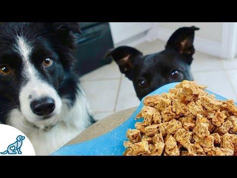 The Best Homemade Dog Training Treats