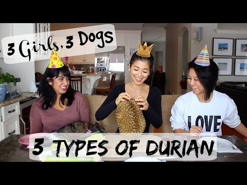 3 Girls, 3 Dogs, 3 Types of Durian