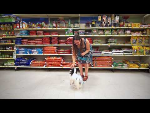 Hestia's quartet of tricks at PetSmart