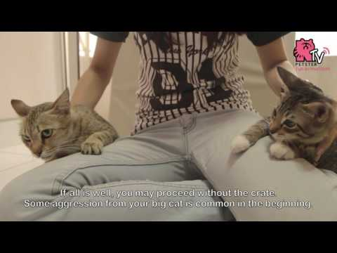Basic Steps Introducing A Kitten To Your Cat At Home