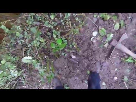Gopro Gardening - Clearing bramble