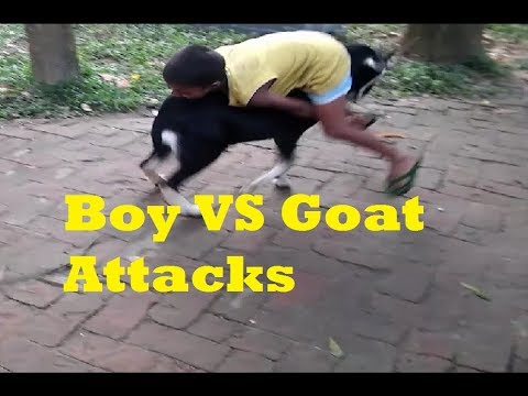 Boy VS Goat Attacks || Crazy Ass Goat Terrorizes People in the streets!
