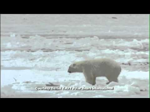 Save the Polar Bears PSA