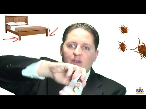 Tips to Get Rid of Bed Bugs Tonight