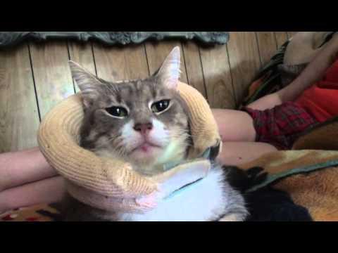 Cat Turns Statue w/ Neck Brace On (Day 457 - 3/30/2016)