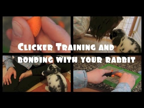 Clicker Training Your Rabbit | How to bond with your bunny!