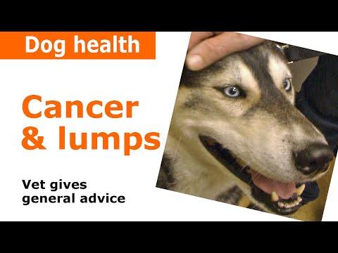 Cancer in dogs - Vet advice